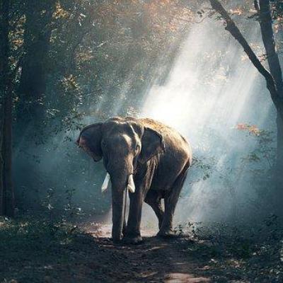 Elephant 1822636 340